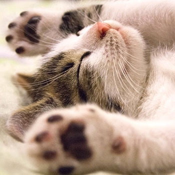 Check out our Feline favourites